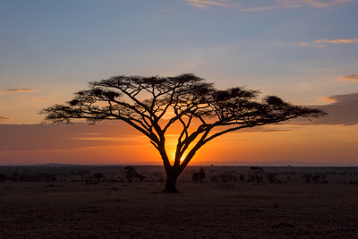 African sunset photograph